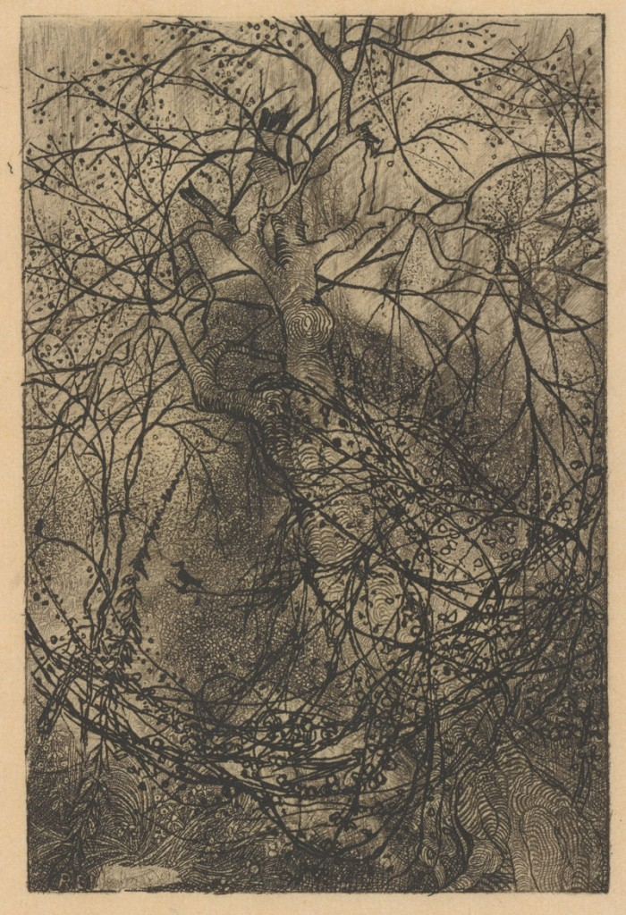 """Branches,"" ca. 1880 etching by French artist Rodolphe Bresdin."