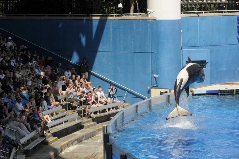 SeaWorld Entertainment Inc. comprises 11 theme parks. Some of its entertainment competitors, like Six Flags, have had money problems, but SeaWorld reported a 73 percent profit increase in the first nine months of this year.