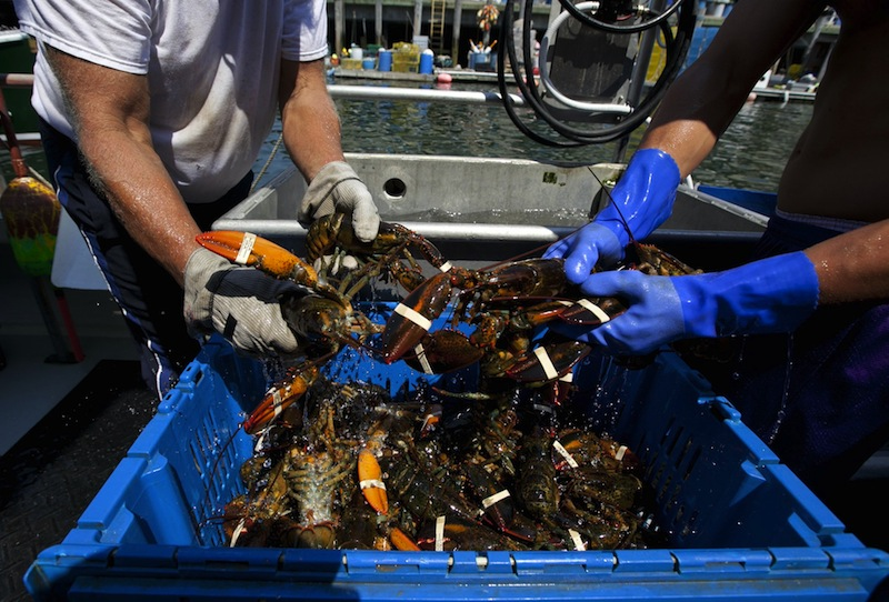 Lobsters are unloaded from a fishing boat Thursday, Aug. 9, 2012, in Portland, Maine. With 2012's wholesale prices being the lowest in years, lobstermen are looking to the state for solutions. (AP Photo/Robert F. Bukaty)