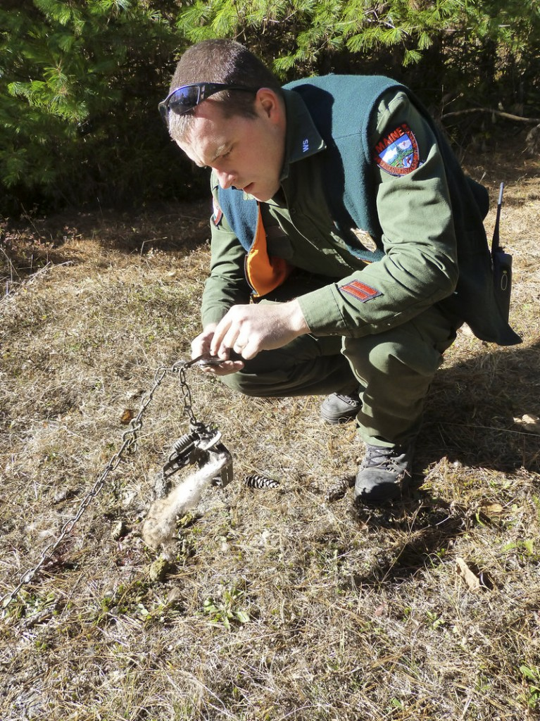 """Warden Alan Curtis checks a trap """"Downeast"""". Featured in March episode of 'North Woods Law.'"""