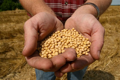 A farmer holds Monsanto's Roundup Ready Soy Bean seeds in this photo. The herbicide-resistant soybean seeds first hit the market in 1996. To protect its investment, Monsanto has a policy that prohibits farmers from saving or reusing the seeds once the crop is grown. Farmers must buy new seeds every year.