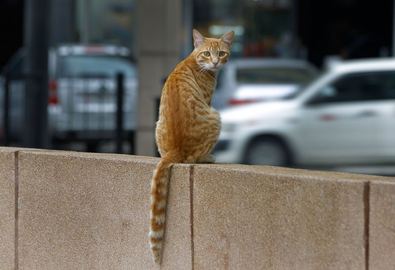 A new analysis says that both feral and owned cats pose a far greater threat to other species than earlier thought.