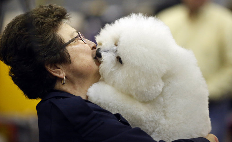 Janet Hartmann of California receives a kiss from Gunner, her bichon frise, while in the benching area on Monday at the 137th annual Westminster Kennel Club Dog Show in New York City.
