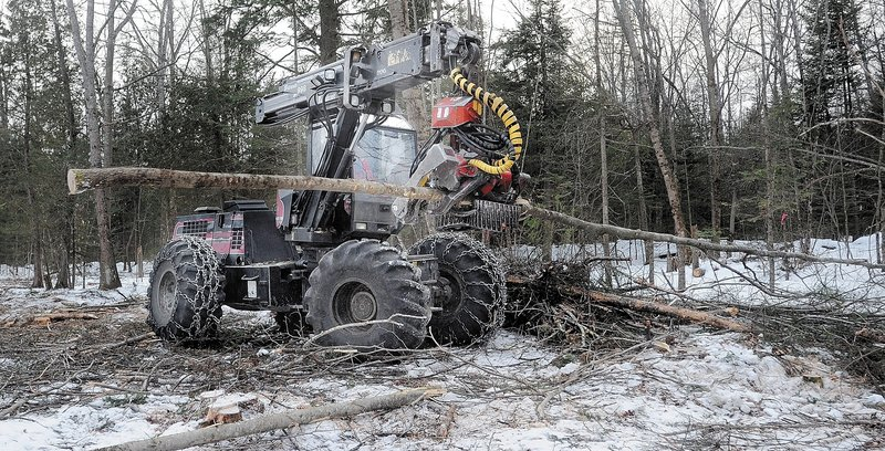 Scott Kinney cuts limbs from trees with a harvester in a select-cut operation in Sidney.