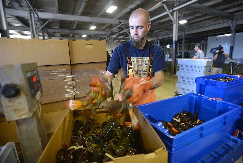 In this September 2012 file photo, Justin Sylvester packs lobsters at Ready Seafood in Portland. Fearing back-to-back seasons of record landings but diminished prices, a majority of lobstermen, processors and dealers told lawmakers Wednesday that they're willing to pay more to do their jobs if the state will spend more marketing its trademark product.