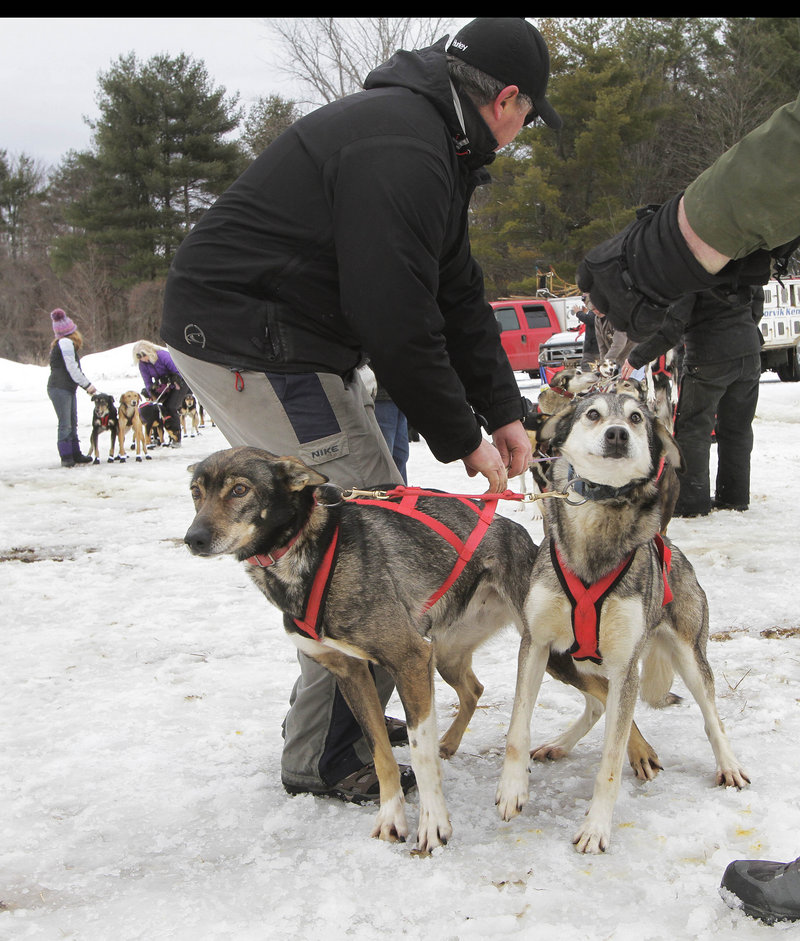 Lead dogs from Jim Blair's team from Eden, Vt., get ready to race at the start of the World Championship Sled Dog Derby, Friday, March 1, 2013 in Laconia, N.H. (AP Photo/Jim Cole)