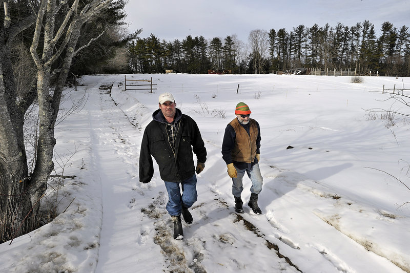 Chris Comstock, left, and his father, Carlton Comstock, walk back from checking on the family's cattle Friday on their 97.9-acre farm in Scarborough. A $270,000 conservation easement bought by the town of Scarborough will protect the farm from development.