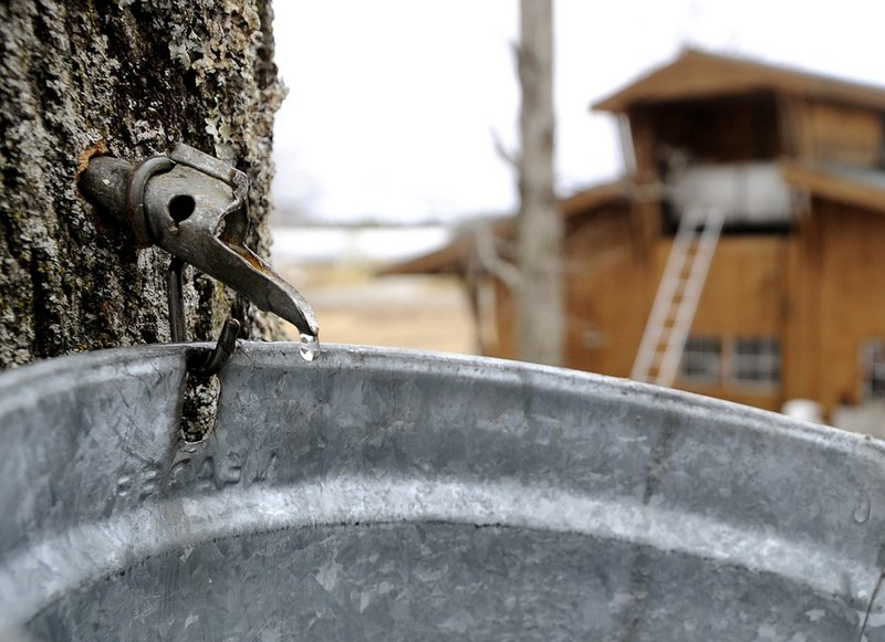 This weekend is Maine Maple Sunday, when the public can visit some of Maine's sugar houses.