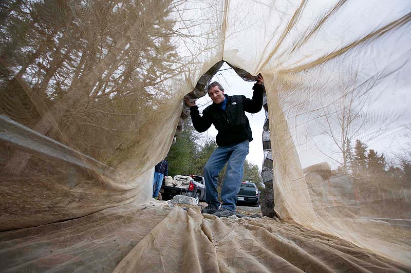 In this March 17, 2013 file photo, Eel fisherman Mike Murphy, of Cundy's Harbor, inspects a 30-foot-long fyke net in Falmouth. A top federal fisheries official says the government has no plan to intervene in a dispute between Maine and the Passamaquoddy Tribe over the harvesting of elvers, even though the tribe has issued so many permits that it put Maine in violation of federal standards.