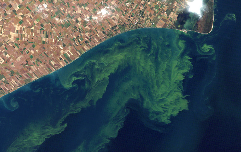 This Oct. 5, 2011, satellite photo from a NASA website shows algae blooms swirling on Lake Erie. A study released Monday said the warming climate and modern farming practices are creating ideal conditions for gigantic algae formations in the lake.