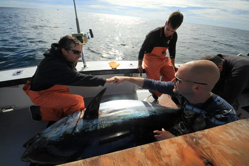"From left, Capt. Dave Carraro of the boat FV-Tuna.com and deckhand Garon Mailman of Saco celebrate a big catch while deckhand Sandro Maniaci looks on in a scene from ""Wicked Tuna."""