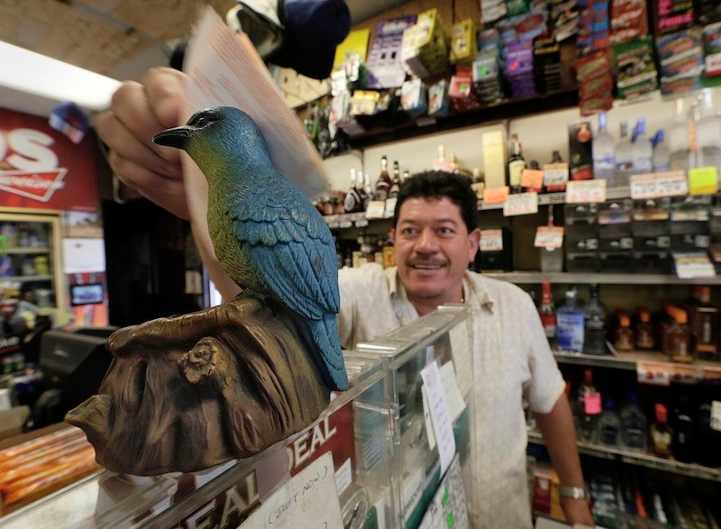"""Ronald Marin rubs his lottery tickets on the wings of a """"bluebird"""" statue for good luck at the Bluebird Liquor store in Hawthorne, Calif. Thursday, May 16, 2013. The multi-state lottery's website said the Powerball drawing jackpot has soared to at least $550 million for next drawing to be held Saturday. (AP Photo/Damian Dovarganes)"""