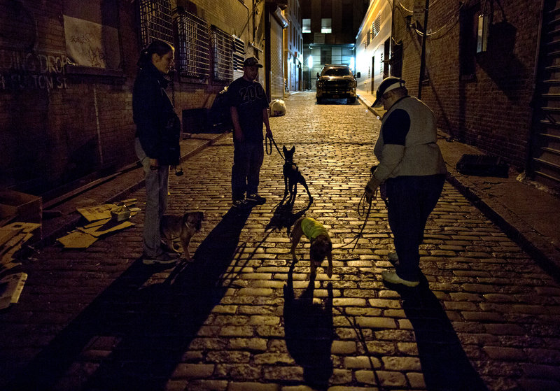 Dogs and their owners gather in a Lower Manhattan alley where the canines of various breeds are encouraged to hunt and kill rodents.
