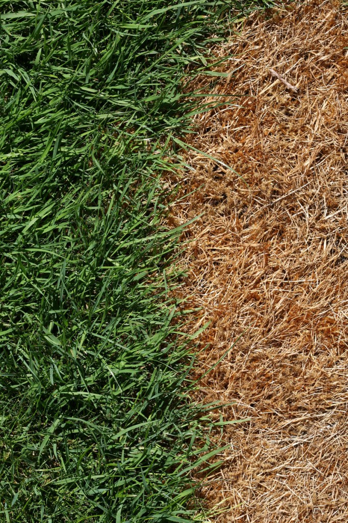 For grass damaged by winter salt: Rake or dethatch it, leaving about a quarter inch of loose top soil. Then add a starter fertilizer and some compost, peat or manure. Rake in some grass seed and water it.