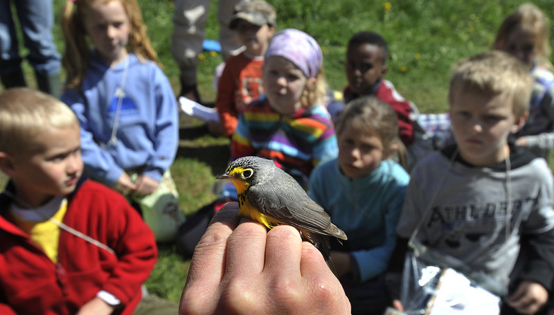 "Patrick Keenan holds a Canada warbler for students. ""At River Point, we're interested in timing, abundance and diversity of migratory songbirds,"" he said."