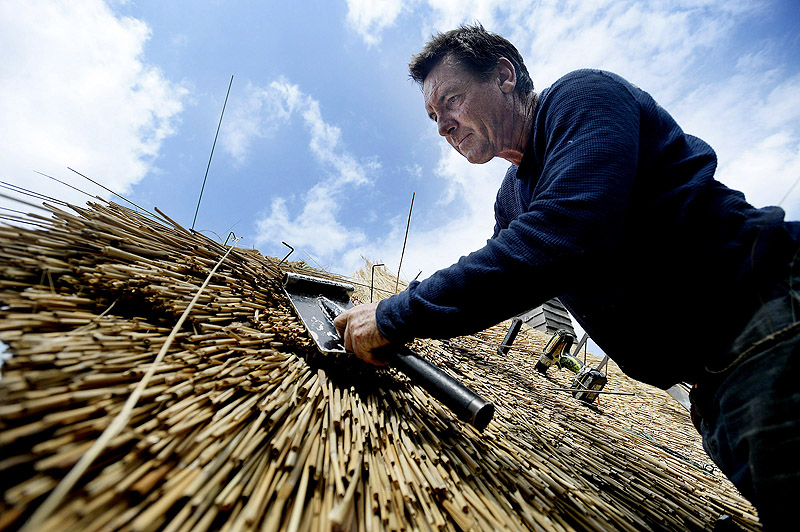 McGhee uses a leggett to position the reeds as he installs the roof Monday. He's been thatching roofs for more than 30 years, and this is his fifth one in Maine.