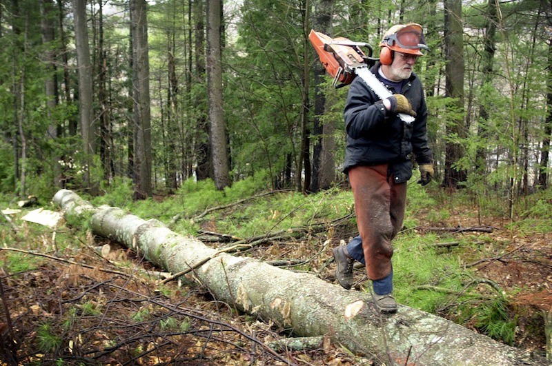 In this 2004 file photo, a logger from Jay, Maine, moves on after felling and de-limbing a white pine in East Dixfield, Maine. Gov. LePage blasted a state senator's roots in northern Maine and the logging industry on Thursday, June 20, 2013.