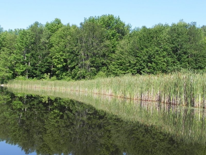 The lake gives a mirror image of a marshy area leading into Jock Stream.