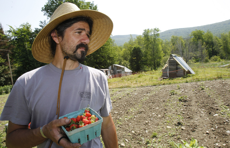 John Vitko holds freshly-picked strawberries in Warren, Vt., in June. Vitko would like to grow hemp to feed his chickens, but federal rules clash with a Vermont law that allows hemp cultivation.