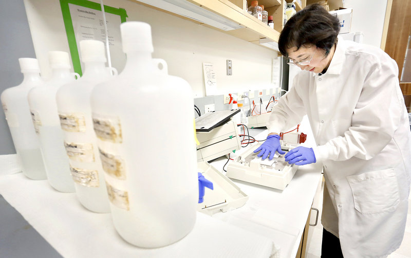 Dr. Xuehui Yang places paper on top of a layer of gel and a layer of membrane in a machine that transfers protein to the membrane at the Maine Medical Center Research Institute in Scarborough on July 1, 2013.