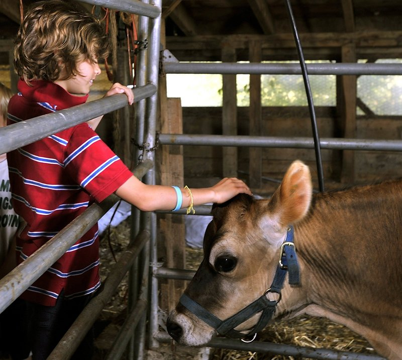 Petting the animals will be part of the experience on Open Farm Day Sunday at farms around Maine.