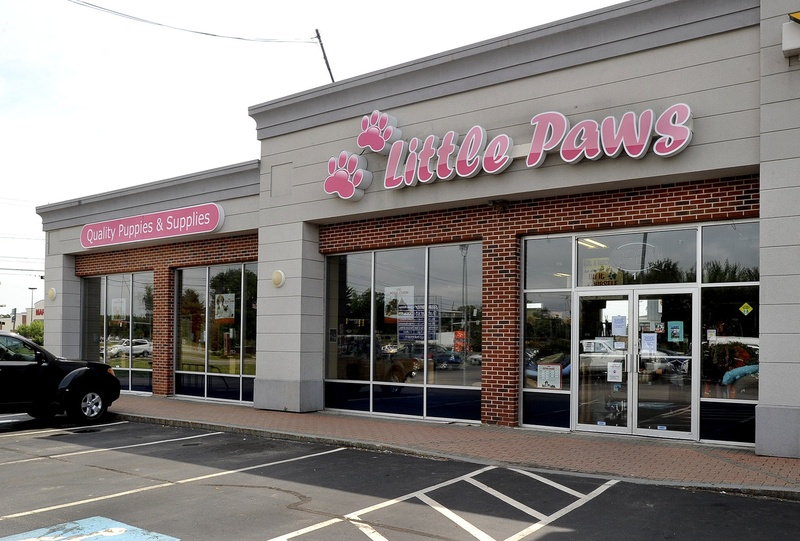 A quarantine in late July was the second this year at Little Paws. During the quarantine, the store was allowed to remain open but could not sell any puppies.