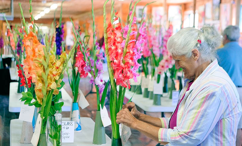 Joyce Mosher sets up a display of gladiolas for a contest in the exhibition hall on the opening day of the 2013 Windsor Fair today in Windsor. Mosher said that her family runs Mosher's Glads a business that sells on Liberty Palermo town line on Route 3. It runs through Labor Day and the fairgrounds are located on Route 32 between Routes 17 and 105 in Windsor.