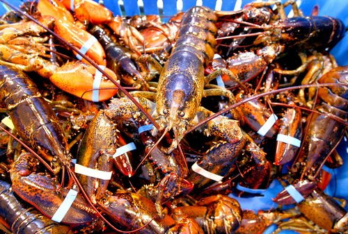 Gov. Paul LePage sent boxes full of items such as prepared lobster meat, frozen tails, bisques and spreads from Maine processors and dealers to the other 49 governors.