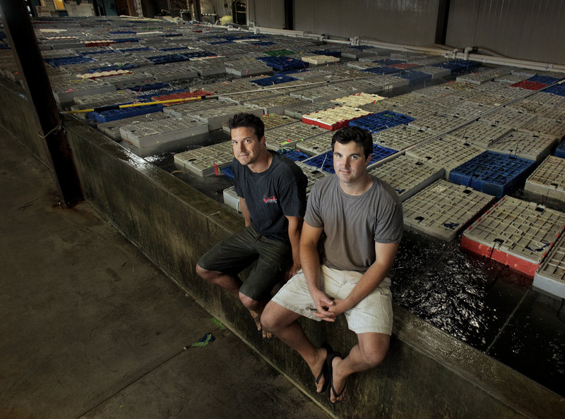 Brendan and John Ready, co-owners of Ready Seafood, are seen with 120,000 pounds of live lobster in Portland.