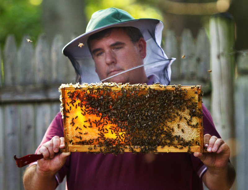 Phil Gaven of The Honey Exchange checks the honey supply and the health of one of his hives behind his Stevens Avenue shop in Portland on Wednesday. Bees and beekeepers have been struggling through one of the worst summers for honey production in Maine in recent memory.