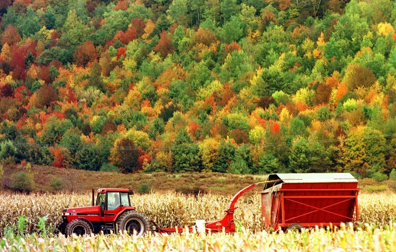 "In this October 1998 file photo, a farmer chops corn in front of a hillside of color in Richmond, Vt. Vermont officials are rushing to the defense of one of the state's most cherished icons, fall foliage, after an Arizona magazine claimed the fall colors in the Grand Canyon state are better than the Green Mountains after they have turned red, gold and orange. The cover of the October edition of the magazine Arizona Highways shows a picturesque scene of a bucolic waterfall surrounded by golden foliage while carrying the headline ""Autumn in Arizona & Why it's better than it is in Vermont."" (AP Photo/Toby Talbot)"