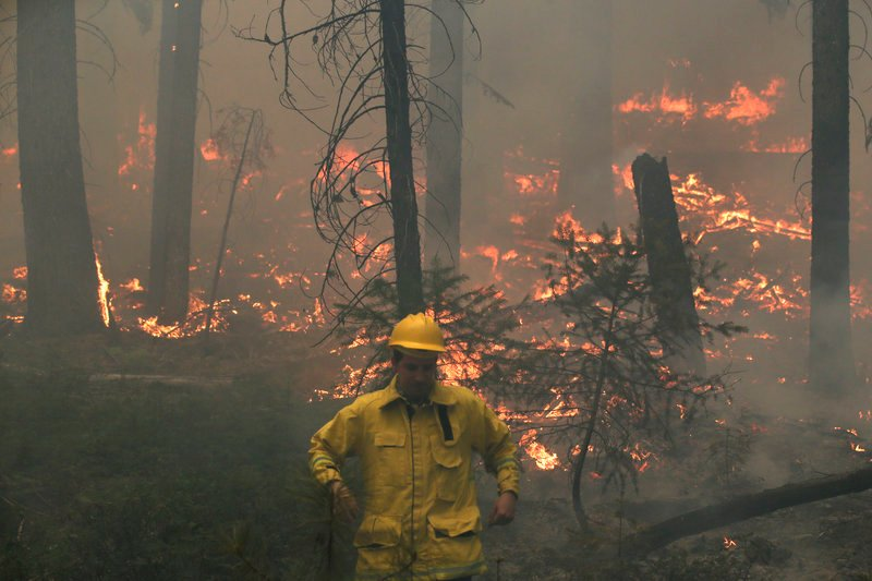 "A reporter moves away from a hot spot while covering the Rim Fire on Tuesday. Ecologists say historic policies of fire suppression to protect timber interests had the effect of ""making the woodpile bigger."""
