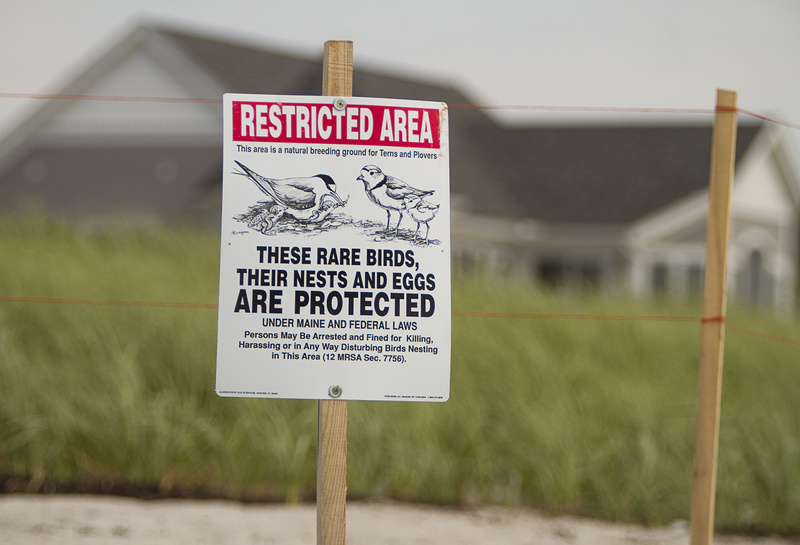 A sign on Pine Point Beach in Scarborough alerts visitors that it is a plover habitat.