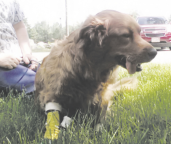 Bella, a mixed-breed dog, died after police said she was a victim of animal cruelty by her owner, James Wiggins, of Fairfield.