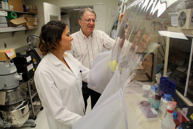 Dr. Jeffrey Gordon and graduate student Vanessa Ridaura examine samples of gut bacteria taken from fat or lean people.