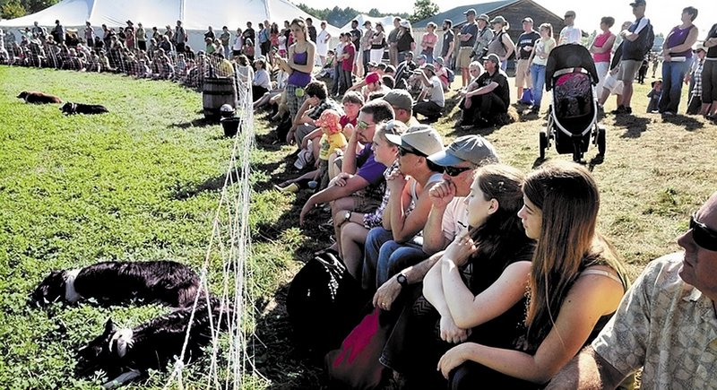 Spectators wait for sheepdogs to herd livestock at last year's Common Ground Fair in Unity. This year, fairgoers will be able to text their observations, thanks to a large cellphone tower.