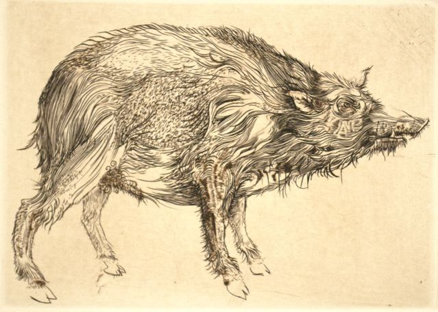 """Wild Pig,"" 1960, by Thomas Cornell"