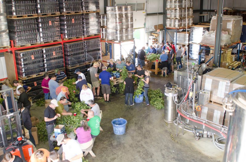 Volunteers strip hops flowers from their vines Sept. 7 at Sebago Brewing Co.'s production facility on Sanford Drive in Gorham. Their labor was rewarded with free beer and lunch.