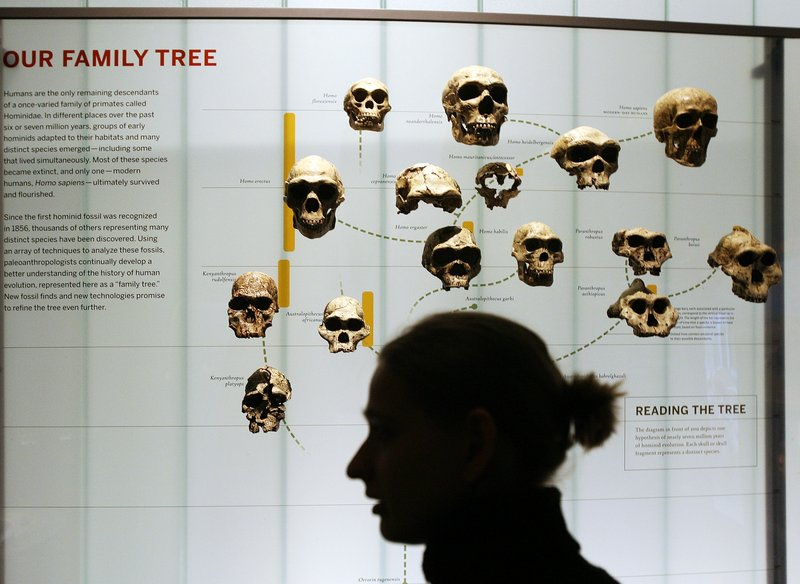 A woman walks past an evolution display at the American Museum of Natural History in New York. The Discovery Institute, which advocates the teaching of intelligent design and creationism, has focused its latest efforts on Ball State University in Muncie, Ind.
