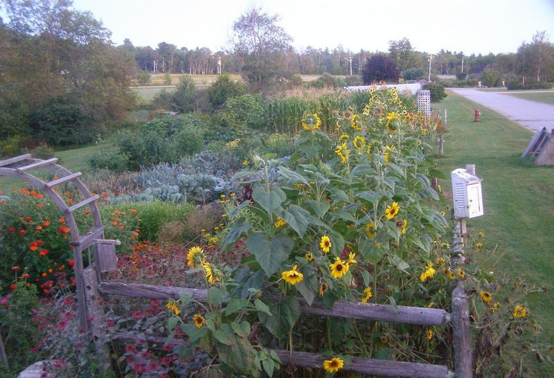 The Troy Howard Middle School garden, above, is in full bloom during harvest time. It is among the school gardens across the state that will be open for tours this Saturday.