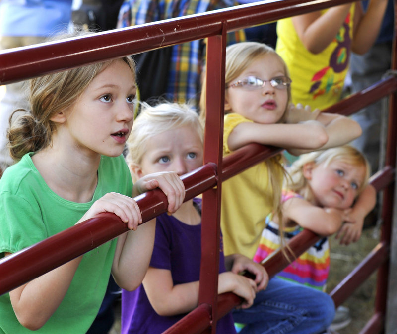 Fair-goers (from left) Grace Clark, Lydia Clark and Ella Clark, of Fairfield, and Charlie Thompson, of Bowdoinham, watch a sheep trimming demonstration Friday, Sept. 20, 2013 at the Common Ground Fair in Unity.