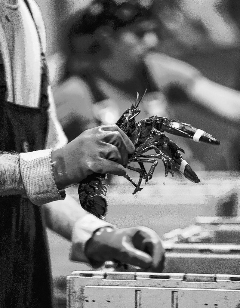 There are humane ways to kill lobsters and Maine processors should be using them, readers say.