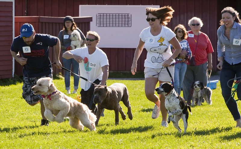 Romping gets competitive as people and their dogs participate in the 50-paw dash during the Planet Dog Foundation's Woofminster 2013 dog show at Camp Ketcha in Scarborough on Saturday. The eighth annual event raises funds for training, placing and supporting service dogs.