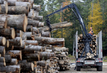 Scott Sargent of Western Maine Timberlands unloads cut trees Tuesday at Southern Maine Firewood in Gorham, which has had a waiting list since September for customers who want seasoned wood.