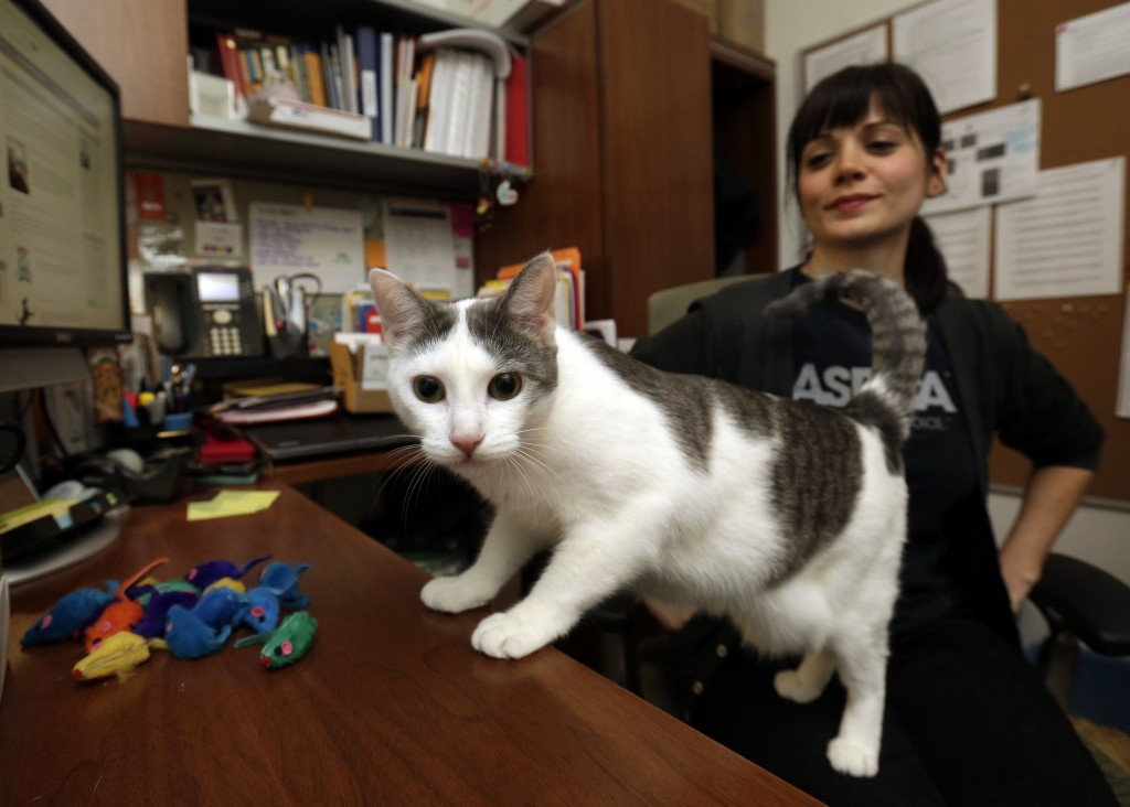 Joy peers into the camera in Jesse Oldham's ASPCA office in New York. She's the last of 300 stray cats taken in at an emergency shelter set up after Superstorm Sandy roared through.