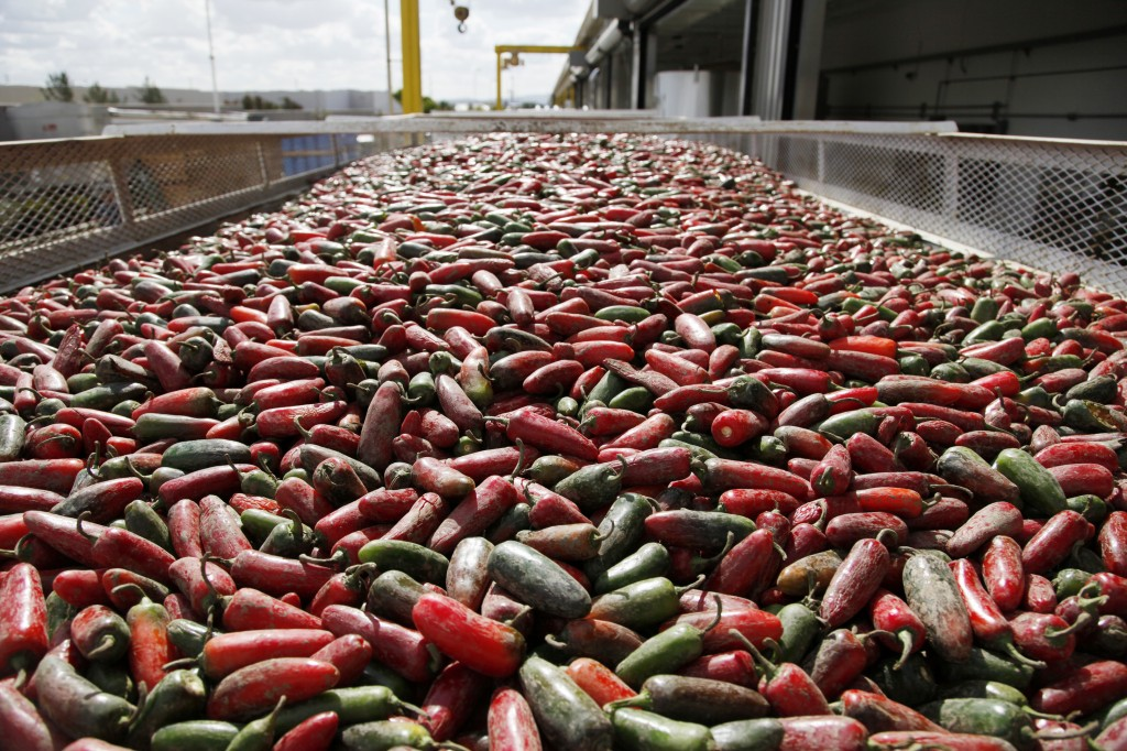 Chili peppers are loaded onto a conveyer belt for making Sriracha chili sauce at the Huy Fong Foods factory in Irwindale, Calif. The maker of Sriracha hot sauce is under fire for allegedly fouling the air around its Southern California production site.