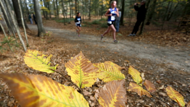 Competitors run in the woods and past the fall foliage during the Western Class B girls' cross country regionals Saturday at Twin Brook Recreation Area.
