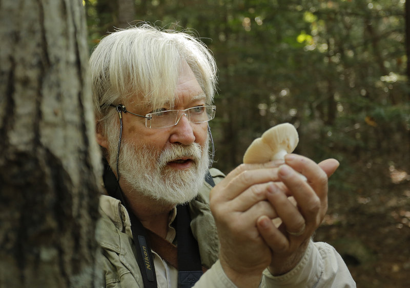 That's a russula mushroom in the hands of Fred Cichocki, who explains it in detail during a guided walk through the Thorne Head Preserve.