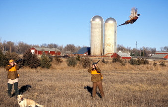 Pheasant hunters are known for their passion for the sport, but no amount of expertise can get around a growing problem – the dwindling number of birds. In large part due to a loss of habitat, the pheasant hunters often return empty-handed.