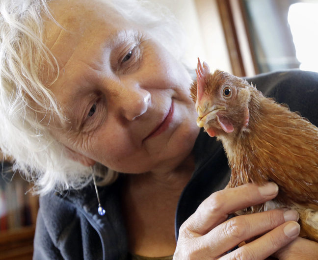 Mary Britton Clouse, who operates Chicken Run Rescue in Minneapolis, holds a chicken Thursday. There is a population explosion of poultry needing shelters.